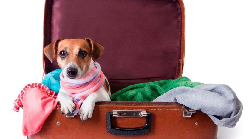 pet_travel_web